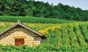 vert-de-vin-comite-champagne-ecologie