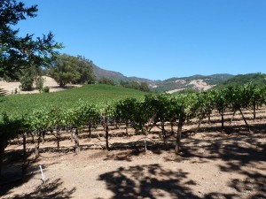 vert-de-vin-kenwood-vineyards-4