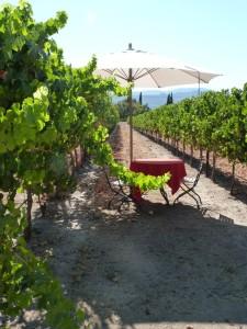 vert-de-vin-clos-du-val-winery-napa-valley