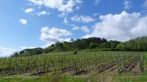 vert-de-vin-chateau-beynat-castillon-cotes-de-bordeaux-1