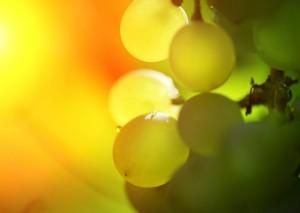 vert-de-vin-tokaji-tokaj-wine-2