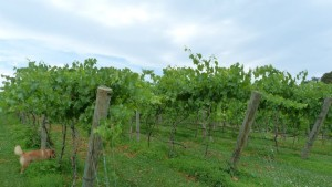 vert-de-vin-glass-house-winery-8