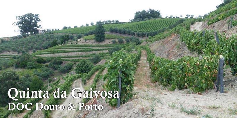 vertdevin-quinta-da-gaivosa-doc-douro-porto-portugal-une
