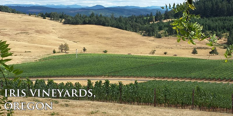 vertdevin-iris-vineyards-oregon-une