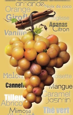 Journées Portes Ouvertes 2014 des vins de Sauternes